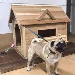 犬小屋が完成しました!